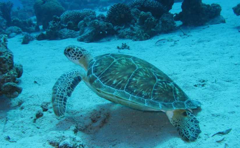 Aw…..!!! Sea Turtles !!!